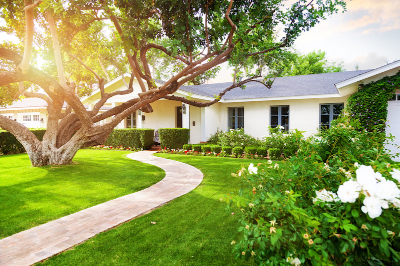 Bring your lawn back to life!